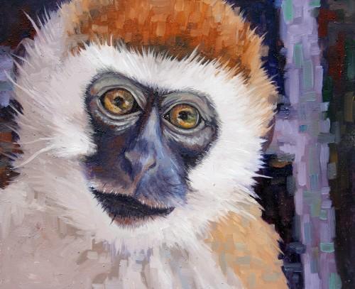 Velvet Monkey.
