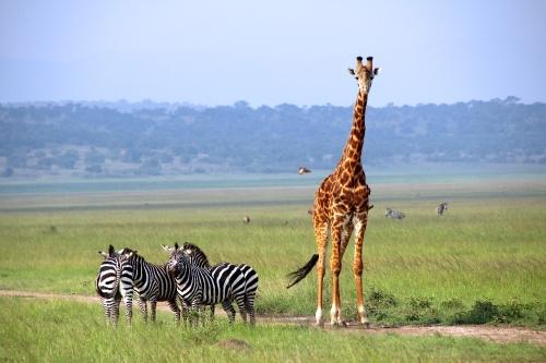Akagera National Park in Rwanda.